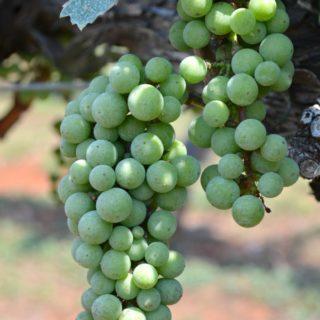 Wolf Mountain Vineyards and Winery {Dahlonega, Georgia}